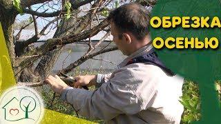 видео Обрезка деревьев и кустарников