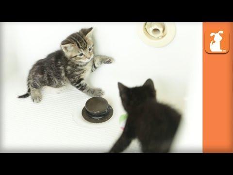 Two Kittens Fight In A Bathtub, Kitten Royale - Kitten Love