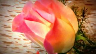 Что будет если держать дома искуственные цветы