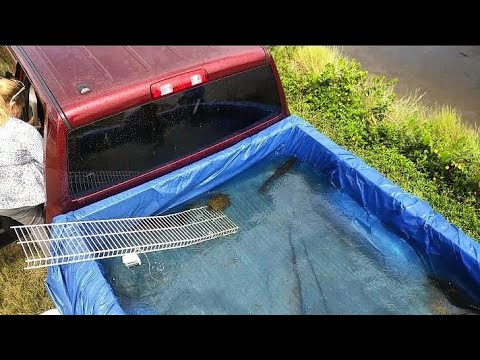 DIY TRUCK Homemade FISH POND!!!