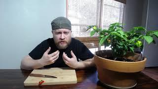 Chili Chunn eats the Scotch Bonnet pepper