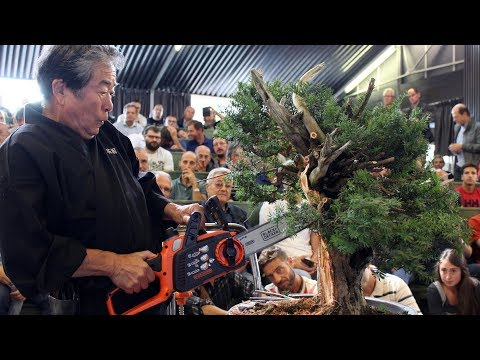 Kunio Kobayashi Bonsai demonstration