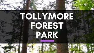 Tollymore Forest Park - Newcastle Northern Ireland