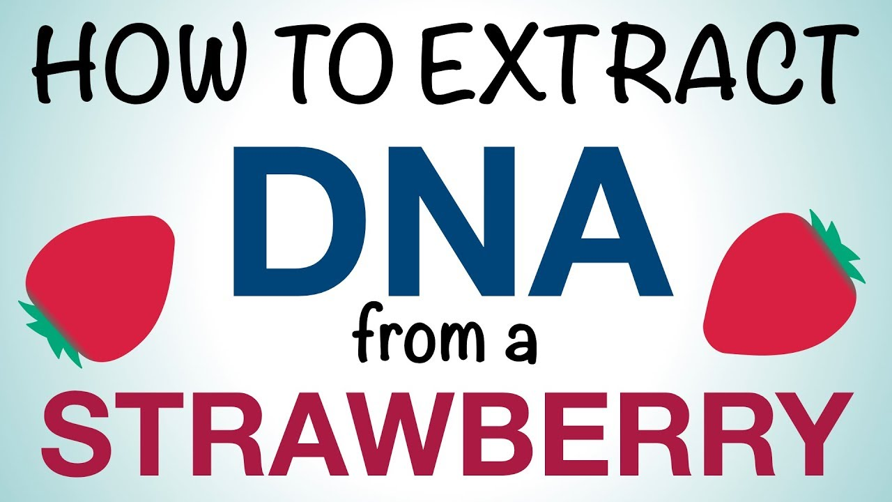 Science Mom Extracts Dna From A Strawberry Youtube
