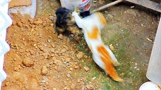 deli kedi kavgası crazy cat fight