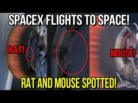 Rat And Mouse Spotted On SpaceX Flights To Space!