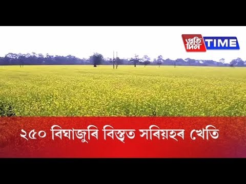 Group of woman turns barren land into massive mustard cultivation ground