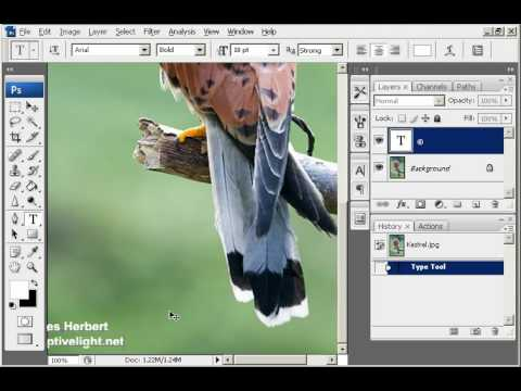 Adding A Copyright Watermark In Photoshop Youtube