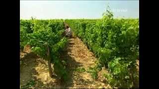 видео Винные регионы Франции
