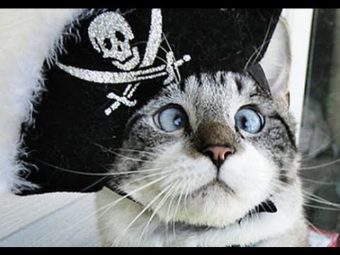 Cute Cross-eyed Kitty! Spangles, Hong Kong Billionaire's Bounty, Google Cars Get OKAY in Cali