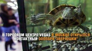 В Москве открылся самый крупный контактный зоопарк