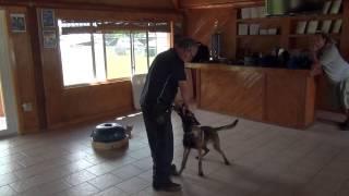 Police Dog Training. Tony Guzman.