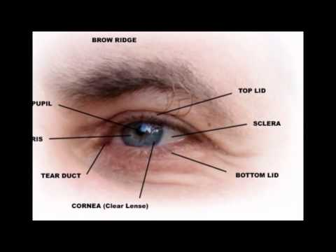 Outer Parts Of The Eye - YouTube