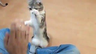 Самый послушный кот 2(Ещё один самый послушный кот. ОБУЧЕНИЕ РАБОТЕ В YOUTUBE http://superpartnerka.biz/shop/go/r173085922231/p/freeyoutube Приколы ютуба!, 2016-02-03T19:47:31.000Z)