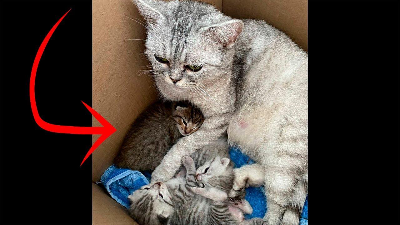 «Нам этот урод не нужен»: у шотландской кошки родился рыжий котенок, хозяйка просто вышвырнула его - скачать с YouTube бесплатно