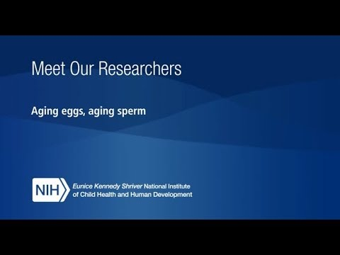 Meet Our Researchers: How does age affect sperm and eggs?