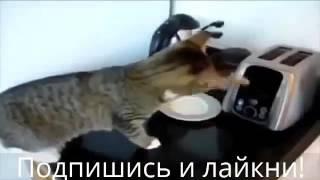 Одни животные смеются над другими приколы 2016 Новинка