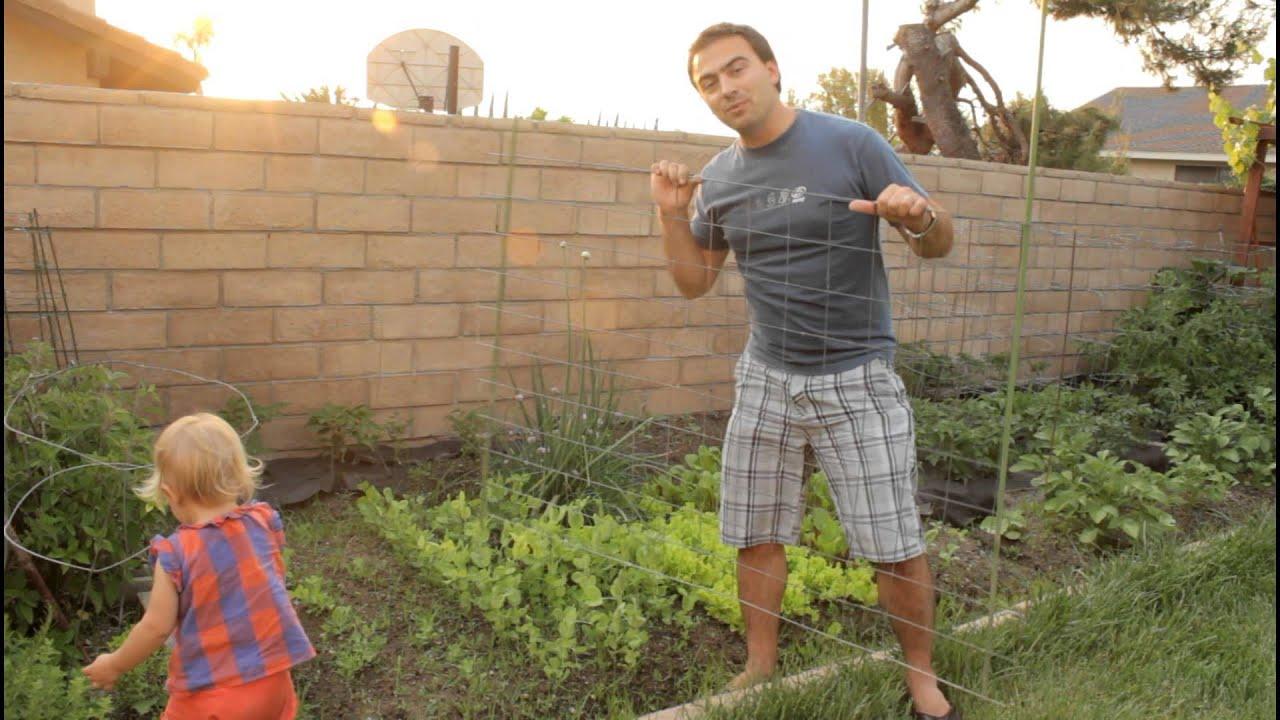 Easy Garden Snow Pea Trellis with California Gardener
