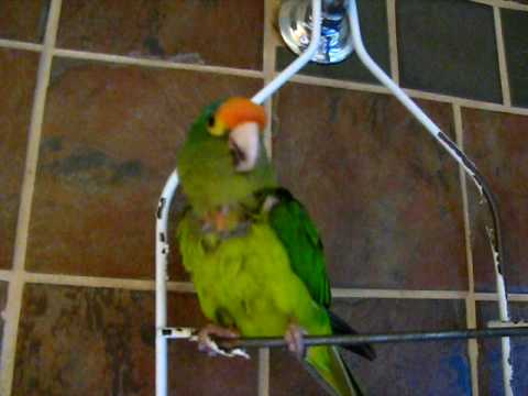 Bird Loves Dubstep Whistles on beat and does funny bird dance:)