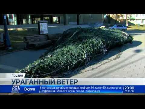 В Грузии ураган вырвал с корнем деревья