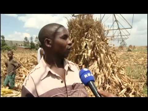 IRRIGATION INCREASED AGRICULTURE PRODUCTION FOR FARMERS  IN RWANDA