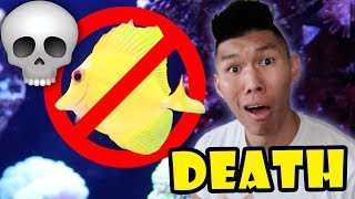 YELLOW FISH JUST WON'T DIE || Life After College: Ep. 565