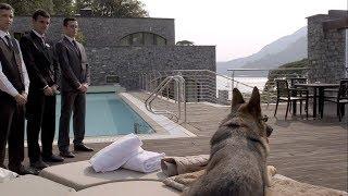هذا الكلب يبلغ سعره 90 مليون دولار.. والسبب لا يصدق !!