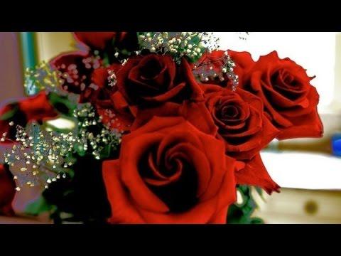 le langage des roses youtube. Black Bedroom Furniture Sets. Home Design Ideas