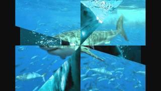 musique les dents de la mer plus photo de requin