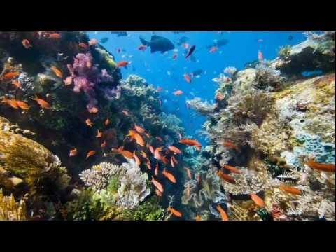 Sea Trek Adventure Weekend in Belize