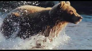 Серьга - Я бурый медведь. Клип.