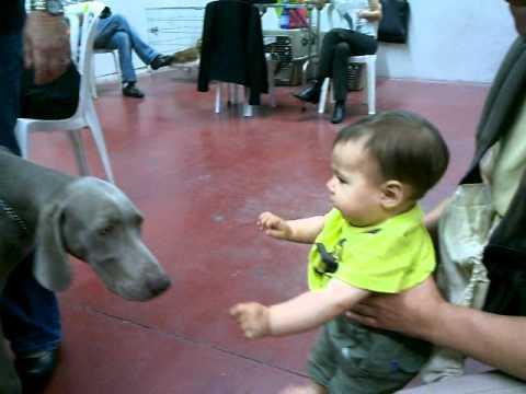 На выставке домашних животных