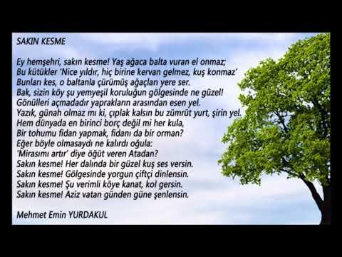 5. Sınıf Türkçe