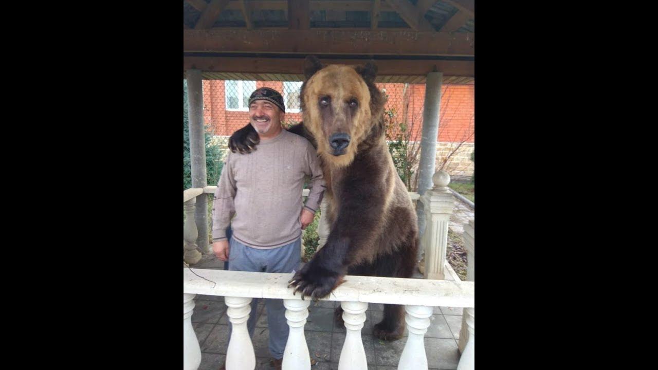 Медведь с вувузелой в центре Москвы поздравляет народ с победой