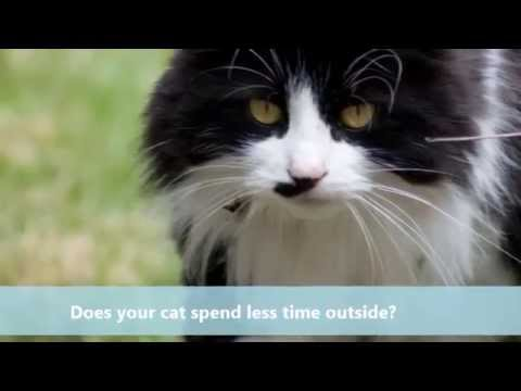 Caring For Your Senior Pet - FREE LIVE CHAT SESSION