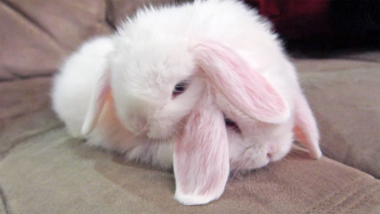 Cute Friends Wallpaper Download Bunny Best Friends Too Cute Youtube
