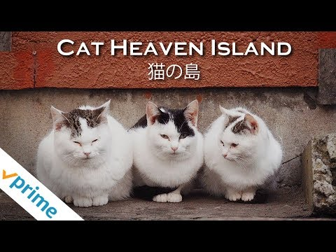 Cat Heaven Island - Trailer