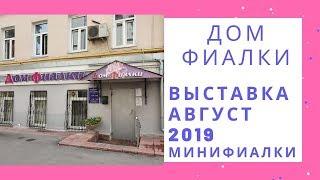Выставка в Доме Фиалки Август 2019 Минифиалки