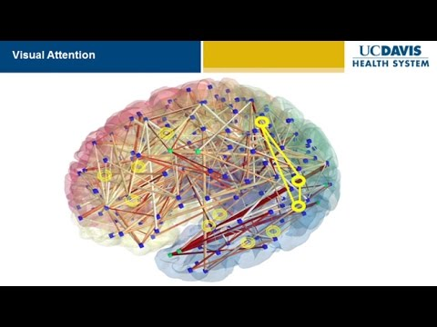 Brain Research: New Discoveries and Breakthroughs at UC Davis - YouTube