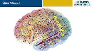 Brain Research: New Discoveries and Breakthroughs at UC Davis thumbnail