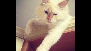 Когтеточка для Кота и Кошки =)
