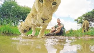 What Do Lions Drink?? | The Lion Whisperer