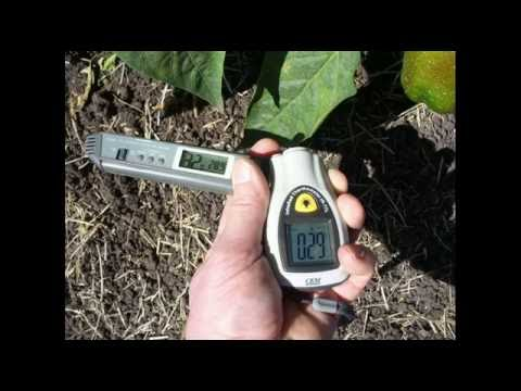 Plant Temperature,  Exploring Why Leaf, Fruit And Soil Temperatures Can Differ Significantly