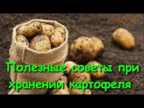 Как правильно хранить картофель. Ошибки при хранении картофеля