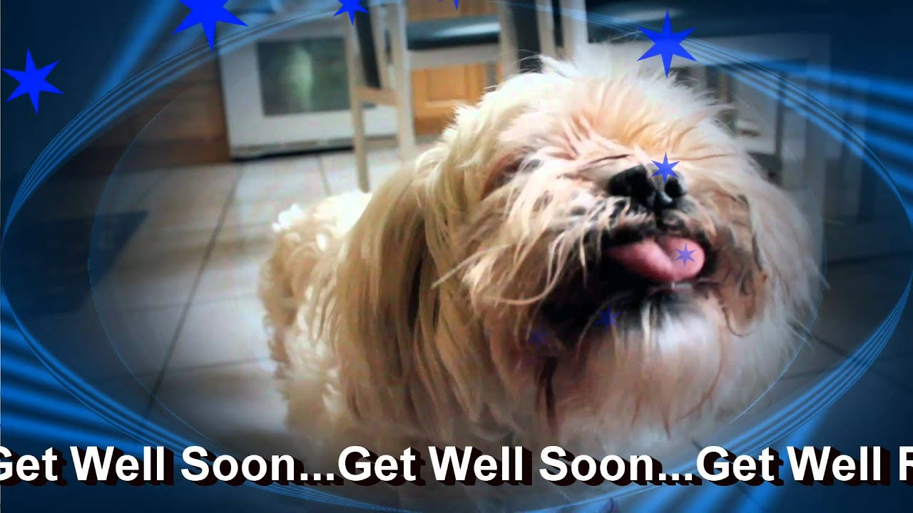 Very Get Well Soon Doggy E Greeting Card - YouTube HT48