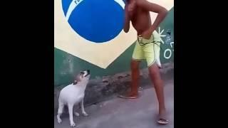 dancing dog, танцующая собака
