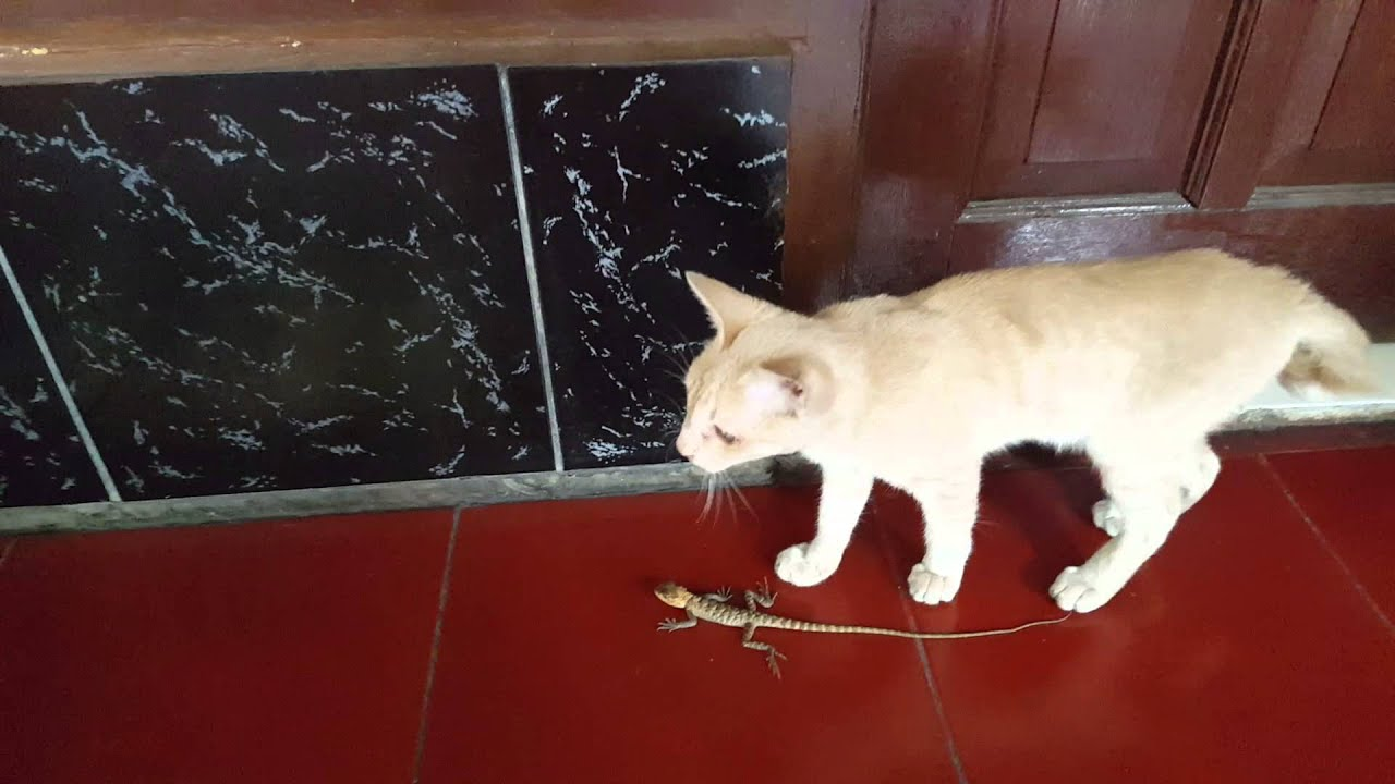 Kitten Vs Lizard Youtube