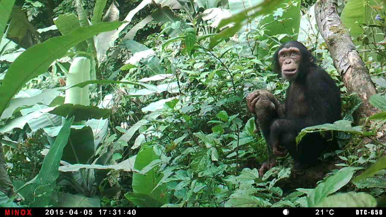 Singapura Laporkan Virus Monkeypox Langka, Diduga dari Hewan Liar Afrika