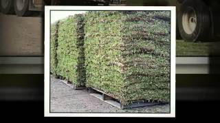 Best Grass for Texas | All American Stone and Turf | 979-696-6443