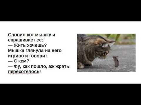 Анекдоты для детей о школе - ДЕТСКИЙ МИР
